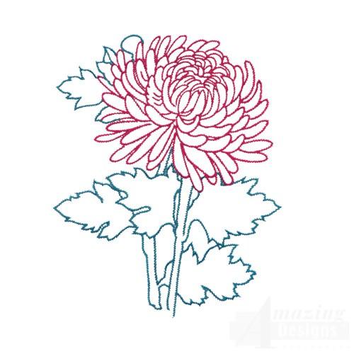 Pattern On Pinterest Chrysanthemums Chrysanthemum