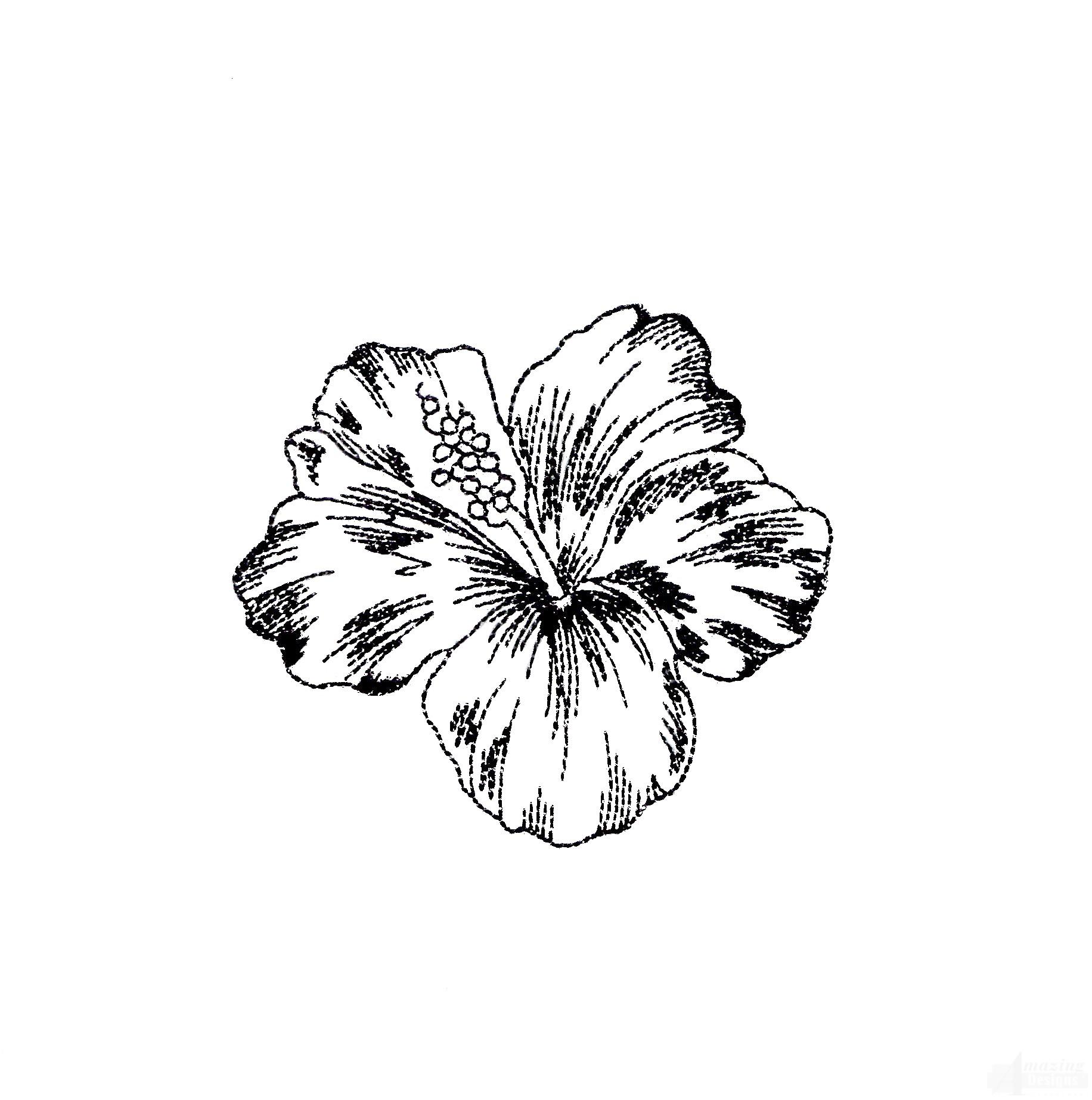 Tropical Flower Line Drawing : Tropical flower sketch pixshark images