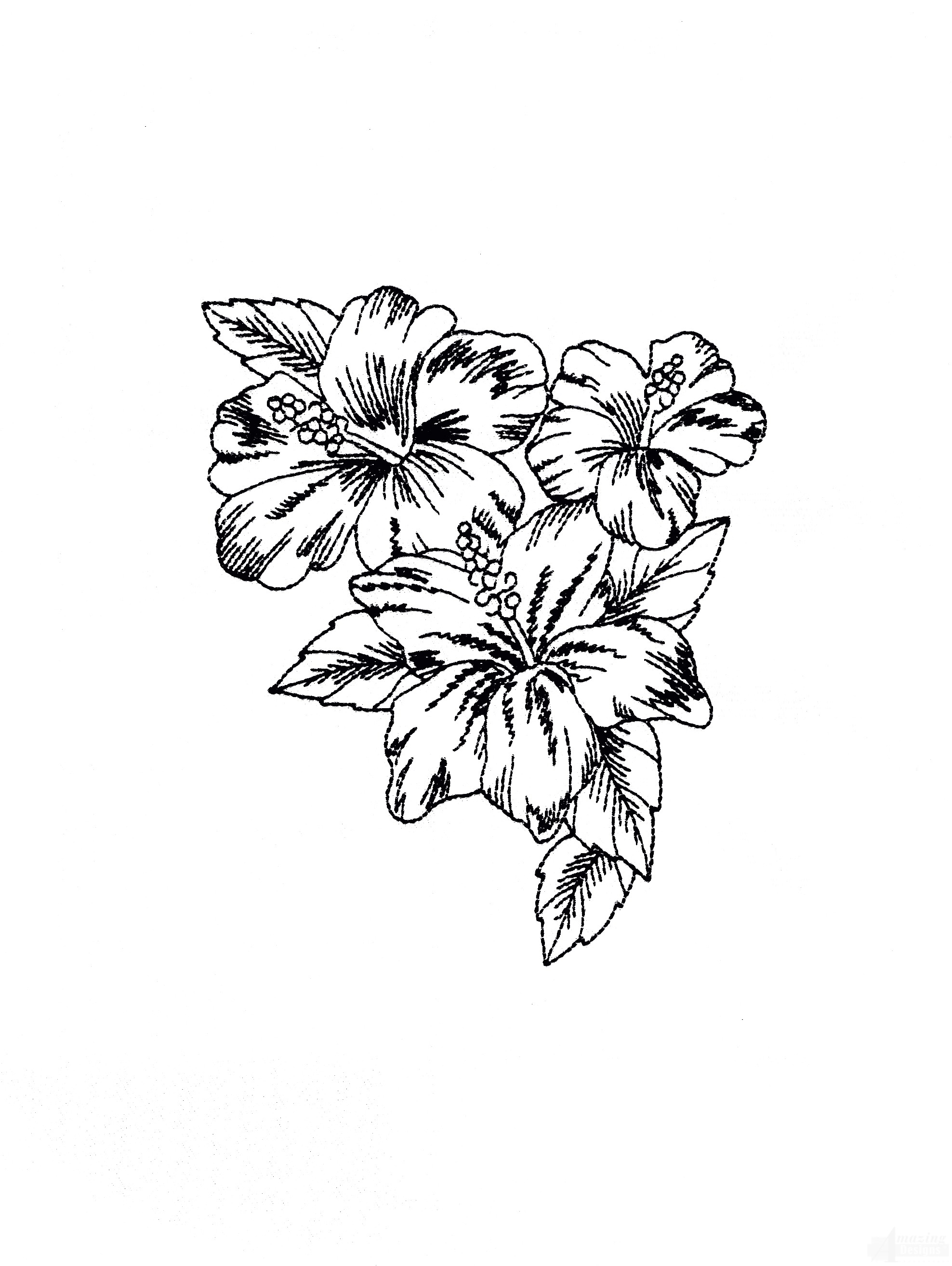 Bot415 Tropical Floral Sketch Embroidery Design