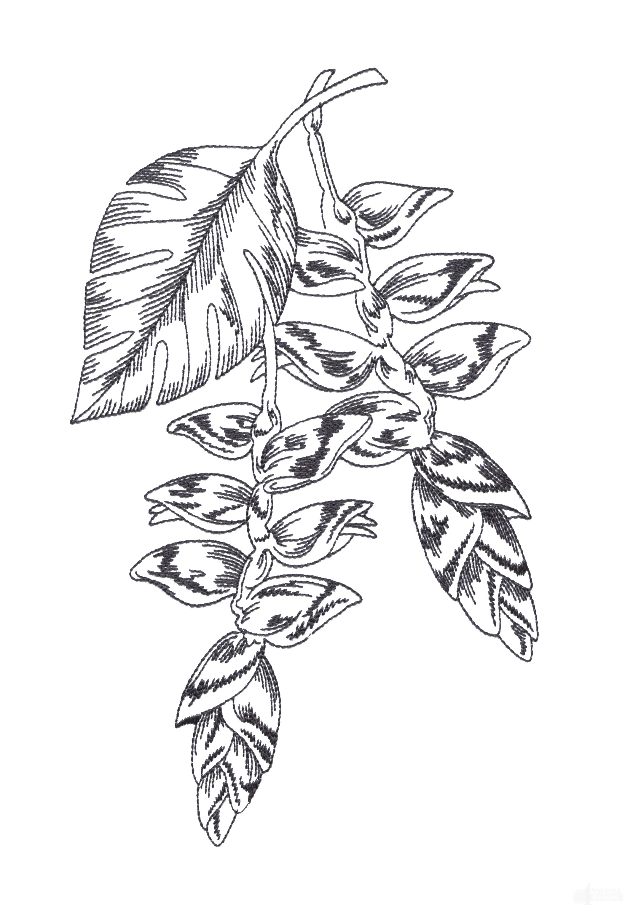 Bot427 Tropical Floral Sketch Embroidery Design