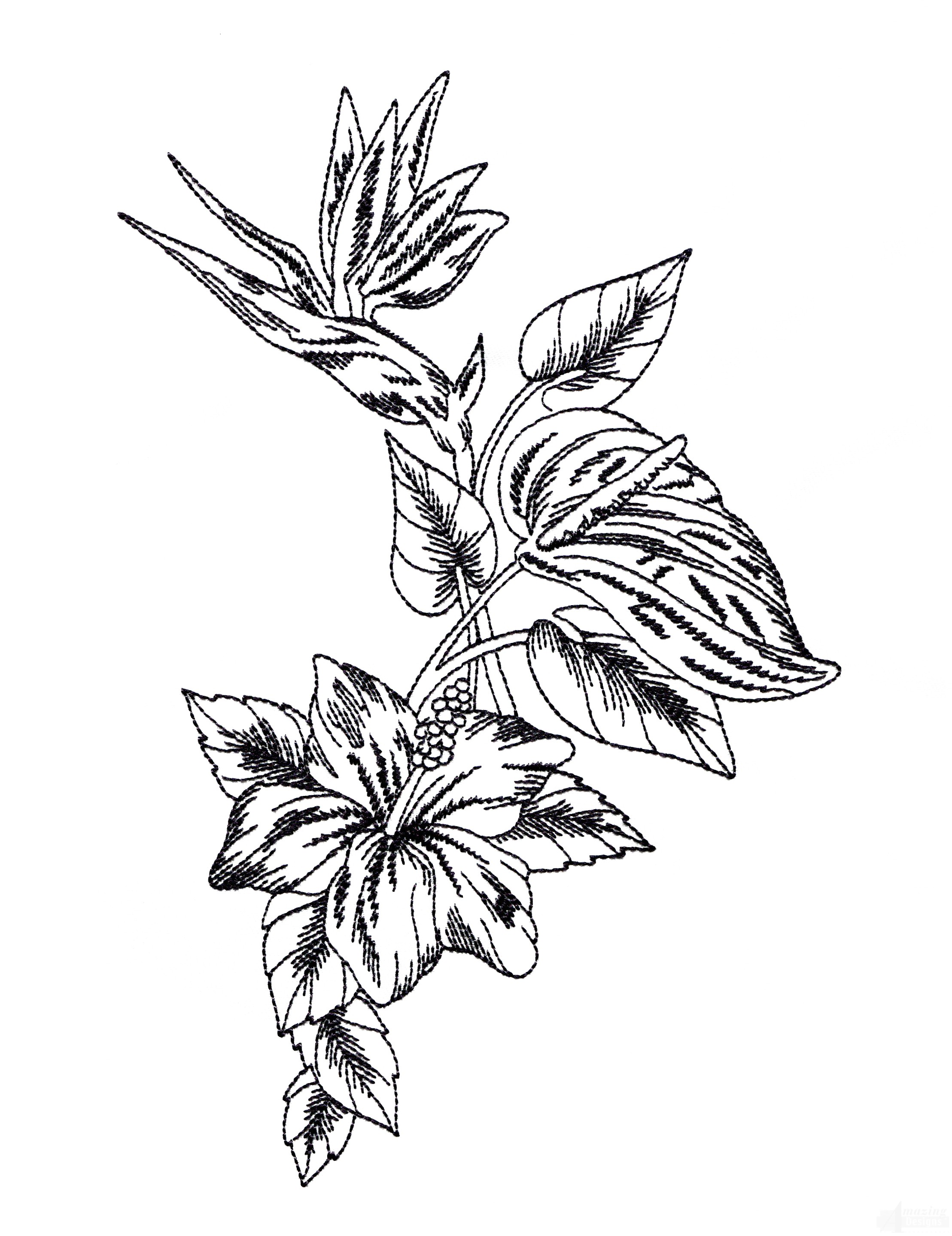 Bot431 Tropical Floral Sketch Embroidery Design