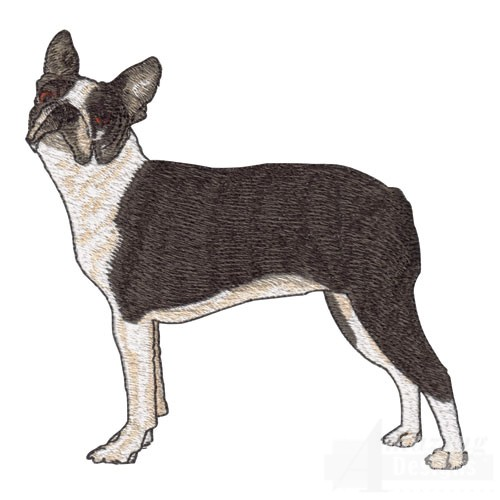 Dog Show Boston Terrier Specs