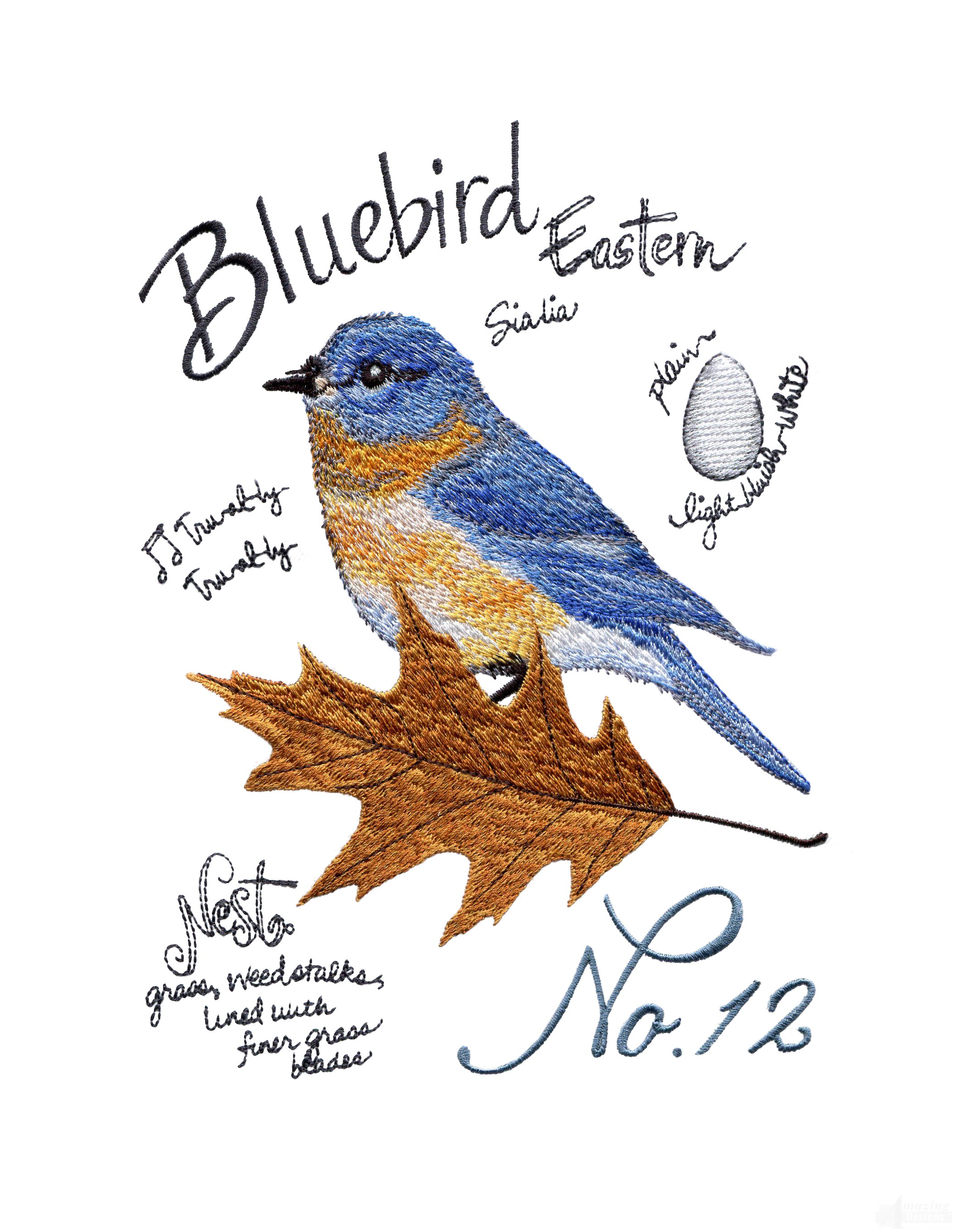 Bird209 Eastern Bluebird Study Embroidery Design