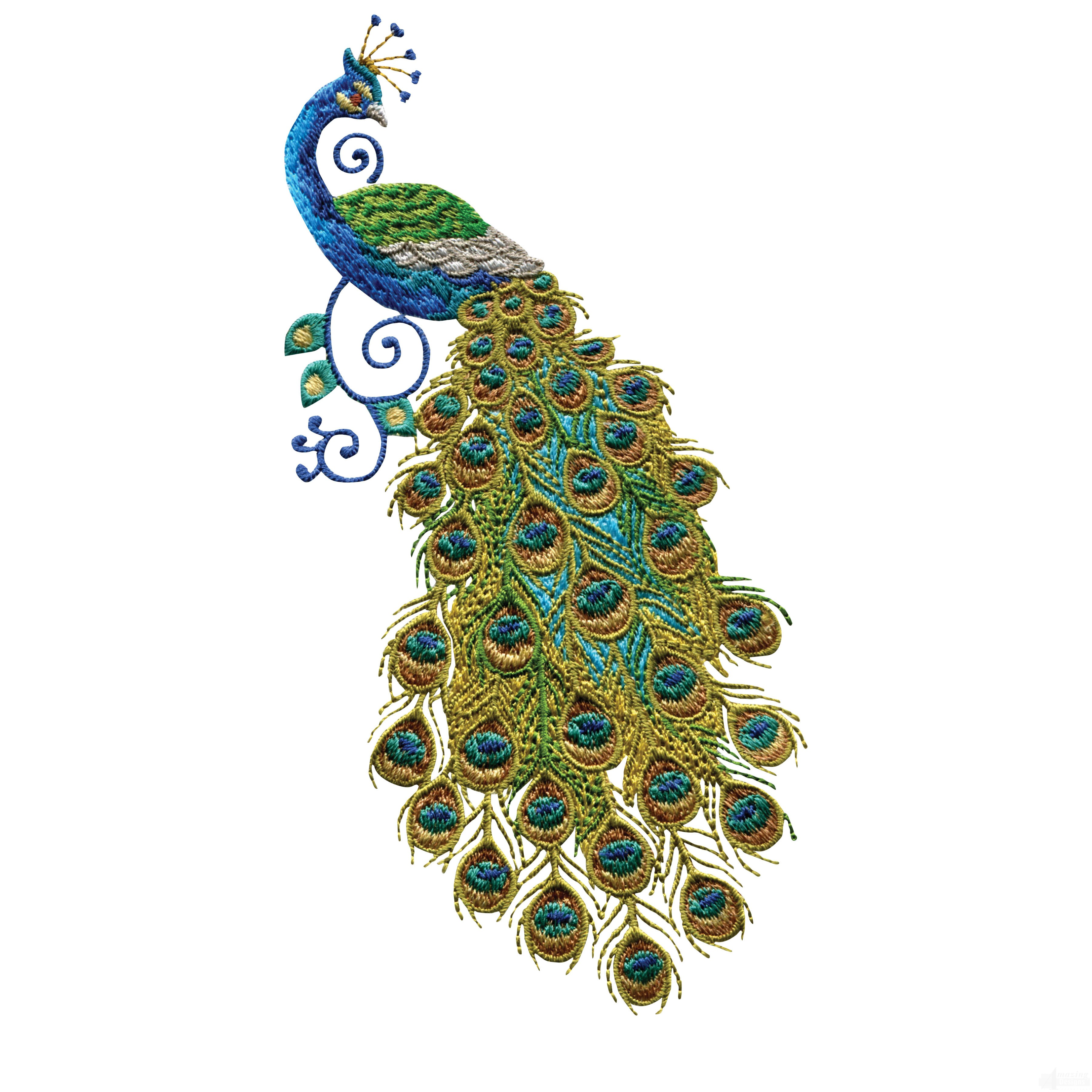 Simple peacock embroidery designs for Embroidery office design 7 5 full