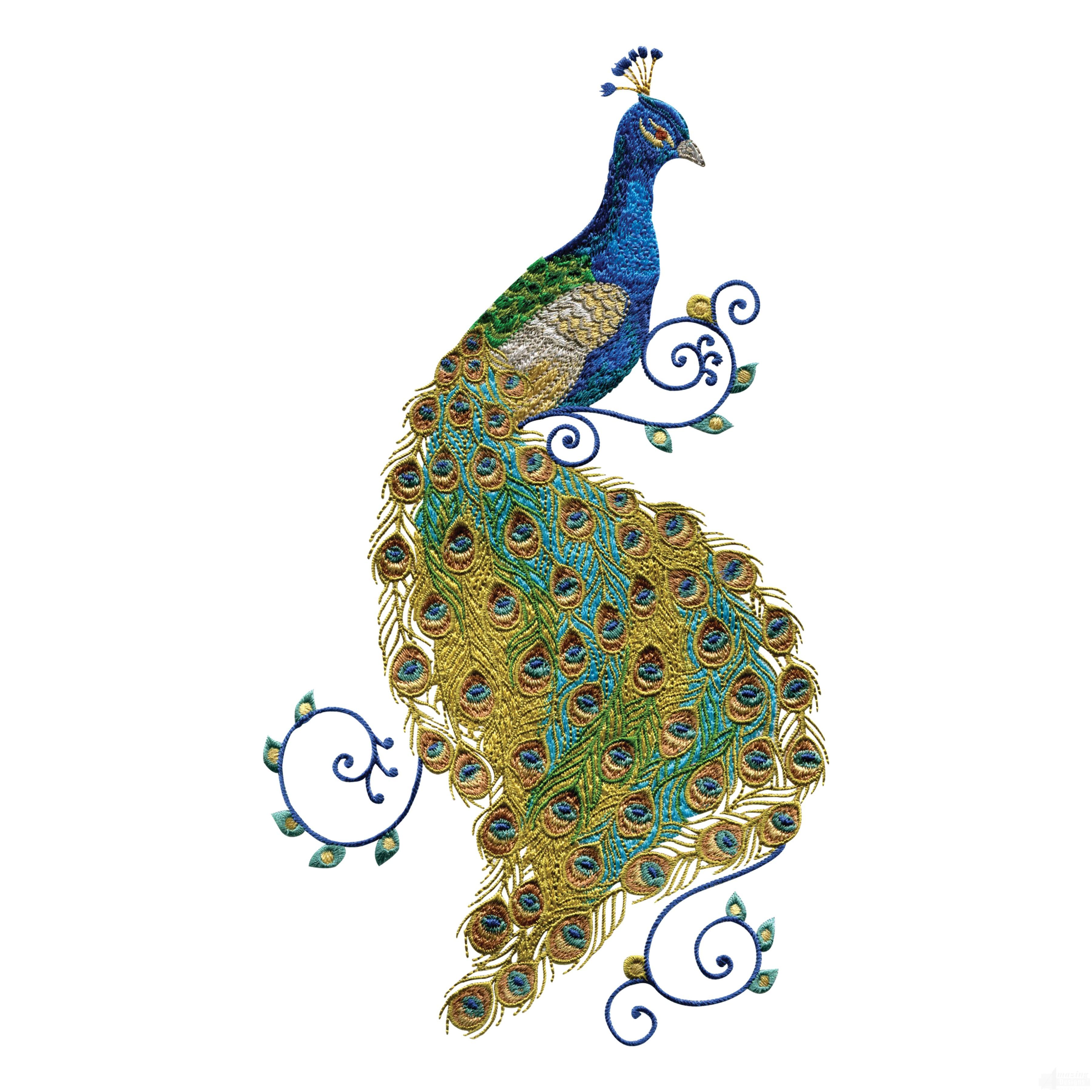 swnpa136 peacock embroidery design