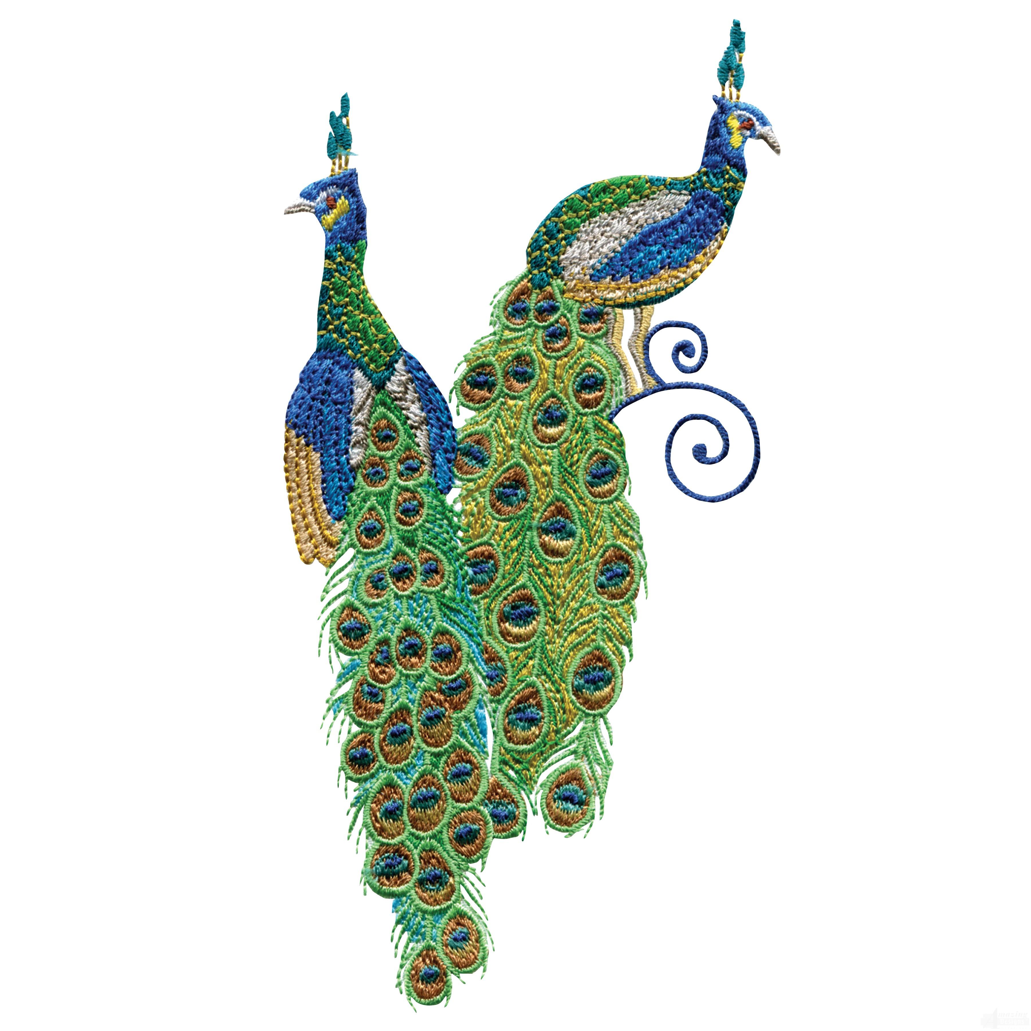 swnpa139 peacock embroidery design