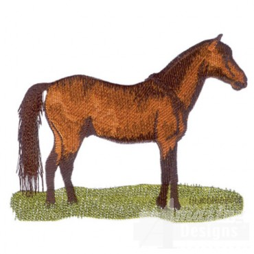 Standing Brown Horse