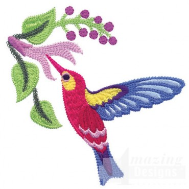 Jacobean Hummingbird 7