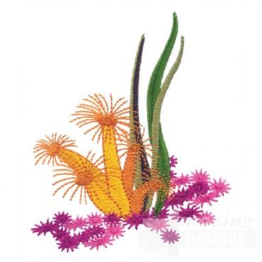 Coral Plants