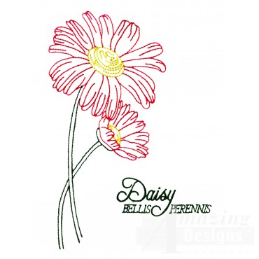 Large Daisy Bellis Perennis Embroidery Design