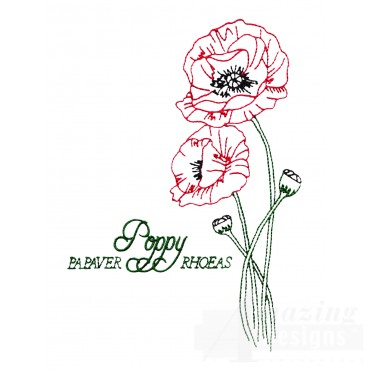 Large Poppy Papaver Rhoeas Embroidery Design