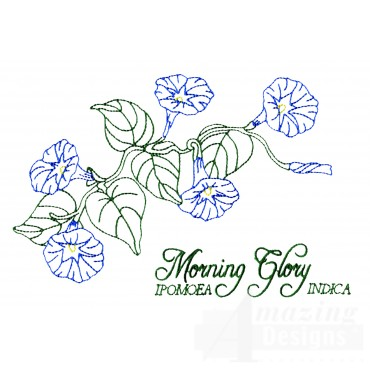 Large Morning Glory Embroidery Design