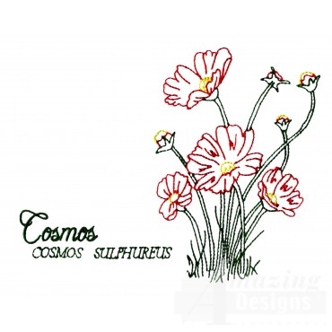 Large Cosmos Sulphureus Embroidery Design