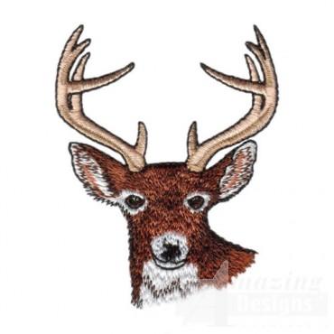 Buck Head