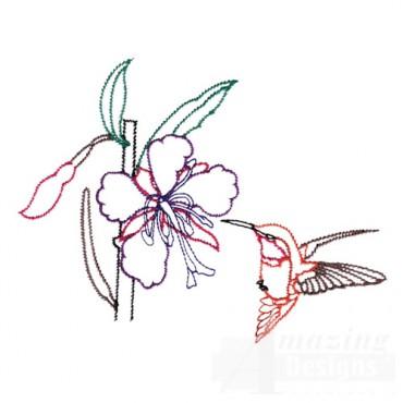 Hummingbird 17