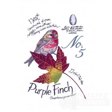 Bird203 Purple Finch Bird Study Embroidery Design