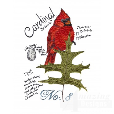 Bird205 Cardinal Bird Study Embroidery Design