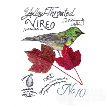 Bird207 Yellow-throated Vireo Bird Study