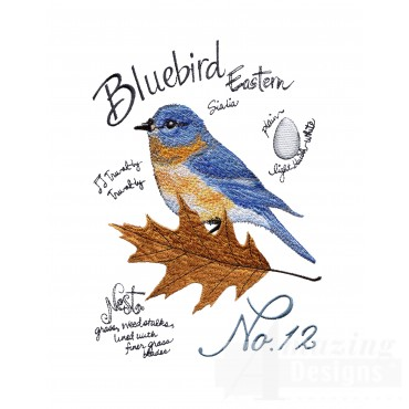 Bird209 Eastern Bluebird Study Embroidery Design