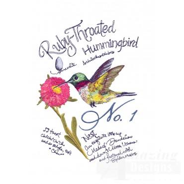 Bird212 Ruby-throated Hummingbird Bird Study