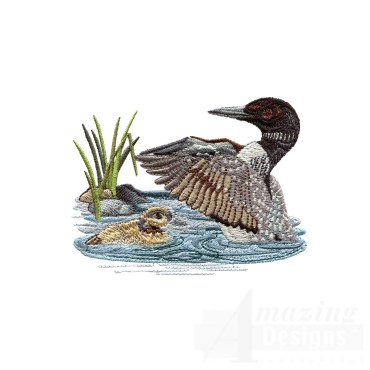 Loon And Duckling