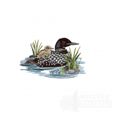 Loon And Duckling 5
