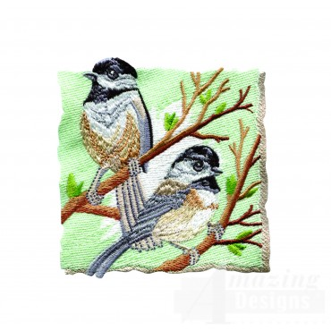 Black-capped Chickadees 1