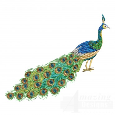 Swnpa144 Peacock Embroidery Design