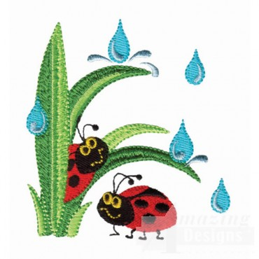 Ladybugs In Rain