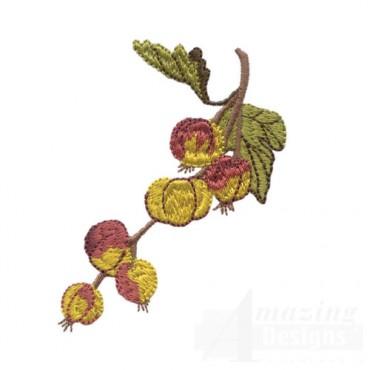 Gooseberry Cluster