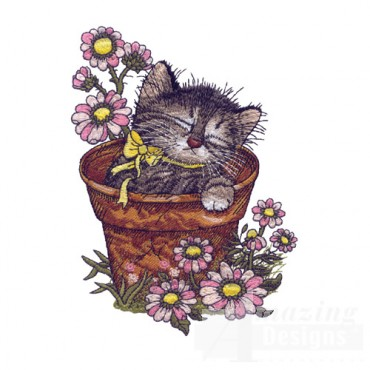 Kitten In Pot