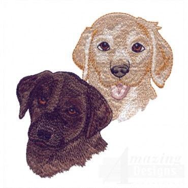 Chocolate And Yellow Lab Heads