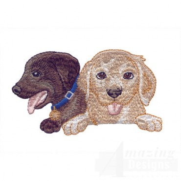 Choclate And Yellow Lab Heads 2