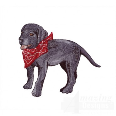 Black Lab With Bandana
