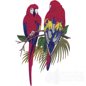 Macaws On Branch