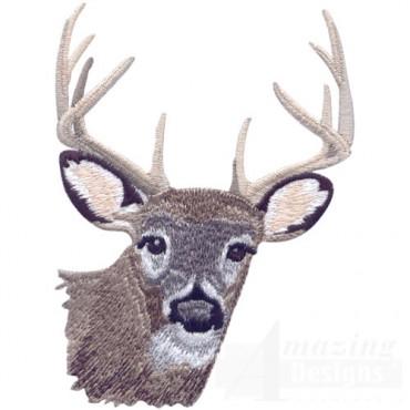 Buck Head 1