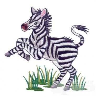 Baby Zebra 2
