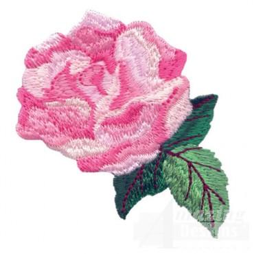 Rose 22