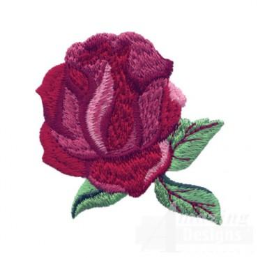Rose 26