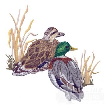 Duck Pair 1