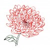 Single Chrysanthemum Indicum Embroidery Design