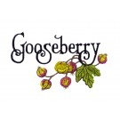 GOOSEBERRY PREMIUM SINGLE DESIGN