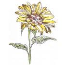 Sunflower Sketchbook Flower Embroidery Design