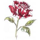 Rose Sketchbook Flower Embroidery Design