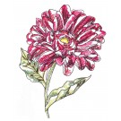 Daisy Sketchbook Flower Embroidery Design