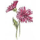 Daisies  Sketchbook Flower Embroidery Design