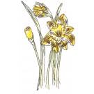 Daffodils Sketchbook Flower Embroidery Design
