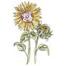 Sunflowers Sketchbook Flower Embroidery Design