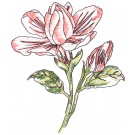 Gardenias Sketchbook Flower Embroidery Design