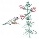 Hummingbird 18
